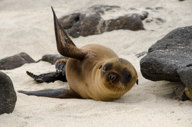 Our Top Galapagos Islands Wildlife Experiences
