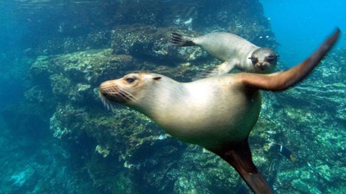 Luxury-Travel-Family-Nature-Tour-To-Ecuador-Galapagos-Islands-Cruise-Wildlife-Sealion