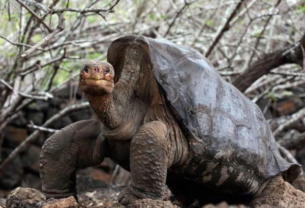 Luxury-Travel-Family-Nature-Tour-To-Ecuador-Galapagos-Islands-Cruise-Wildlife-Giant-Tortoise