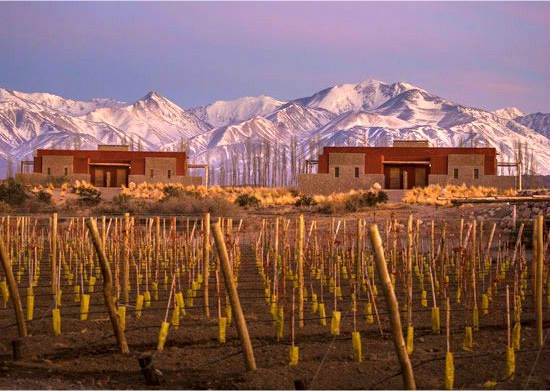 Insider's Guide to Mendoza and Argentina's Wine Capital