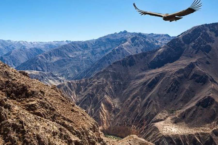 condor flying in the Andes
